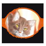 Szegedi Cicamentők Állatvédő Egyesülete