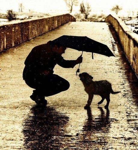 NOÉ Állatvédő Közhasznú Alapítvány