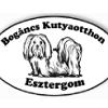 Bogáncs Kutya- és Kisállatotthon Alapítvány