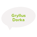 Gryllus Dorka